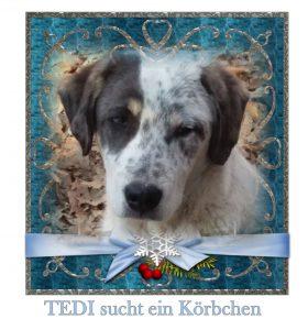 tedi-sucht