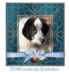 tobi-sucht