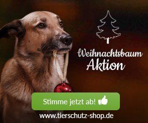 weihnachts-aktion-2016-affilinet-hund2